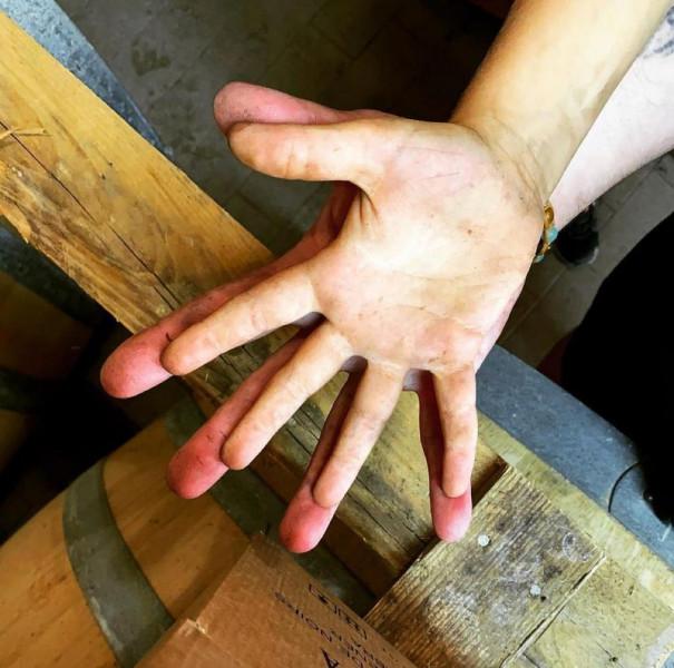 Nicola, il vino e la vigna #5